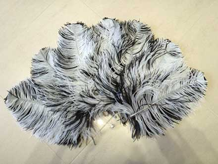 Ostrich-Feather-fan-black-and-white-transparent-bars-back-side-.jpg